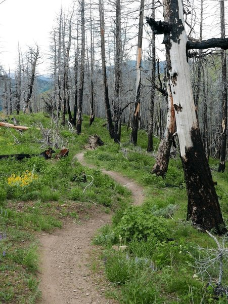 Headed into the burn zone on Warm Spring Trails.