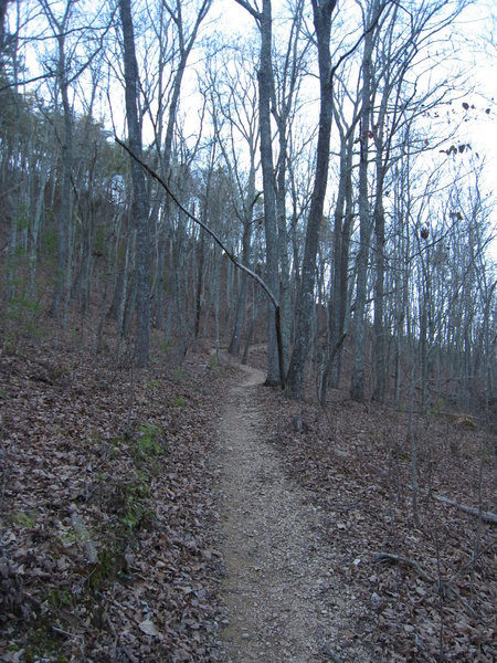 Descent from Horn Mountain to Snake Creek Gap Trailhead.