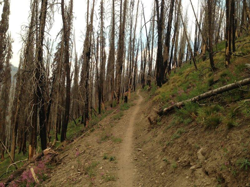 Getting closer to town on Osberg Ridge Trail