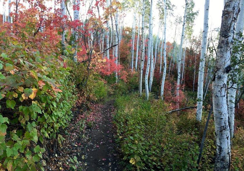 Beautiful fall scenery!