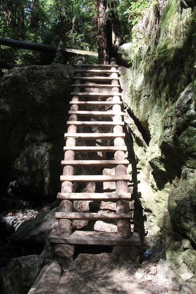 Ladder on steep Ravine Trail.
