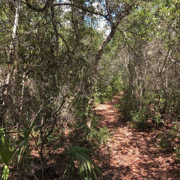 Trail through the scrub