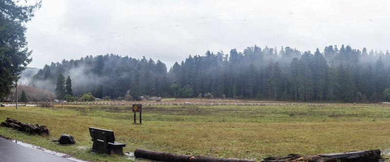 Prairie Creek meadows on a misty rainy winter morning.