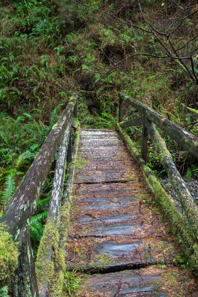 Mossy bridge crossing one of the creeks on Saddler Skyline Trail.