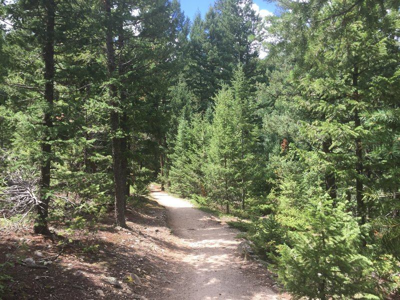 This is right around the start of the shady portion if you take the Elk Ridge shortcut.