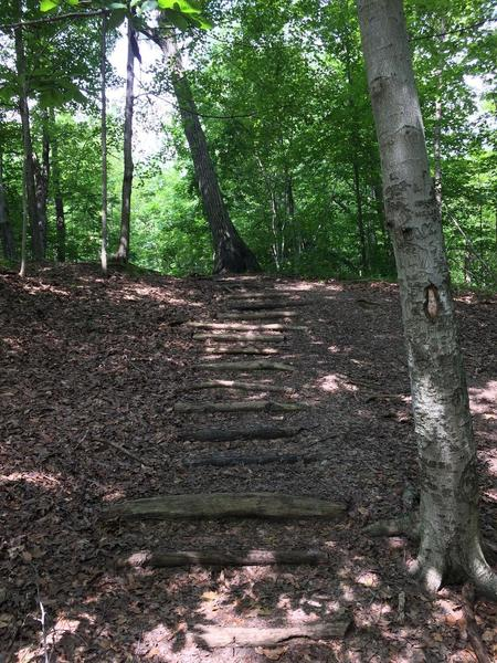One of two areas on the trail. This is a set of stairs made from natural resources in the woods.