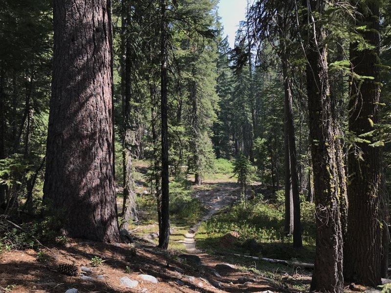 Sugar Lake Trail in Russian Wilderness
