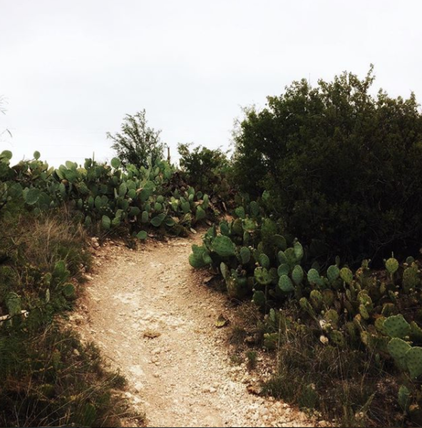 Prickly pear along the trail.