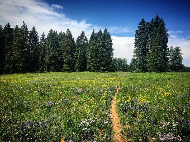 July wildflowers on Mesa Top!