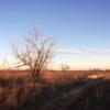 West Texas Winter.