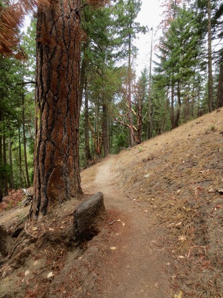 A characteristic view of the Red Queen trail.