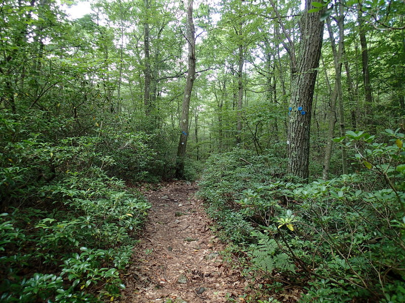 Junction of Wiccopee Trail and School Mountain Road Trail.