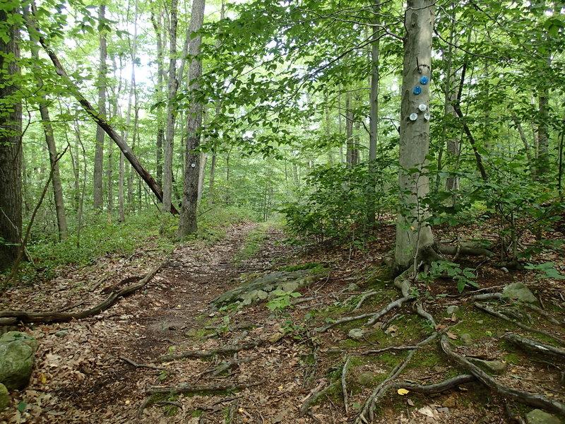 Start of Clove Creek Trail.