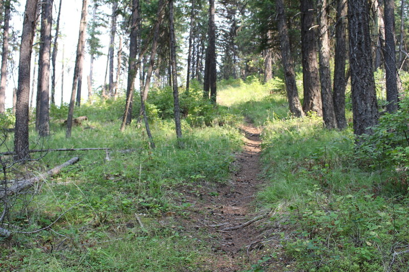 Some of the great singletrack toward the end of Timber Mountain Trail.