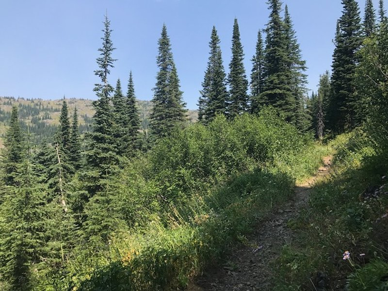 Trail #51, headed towards the ridge.