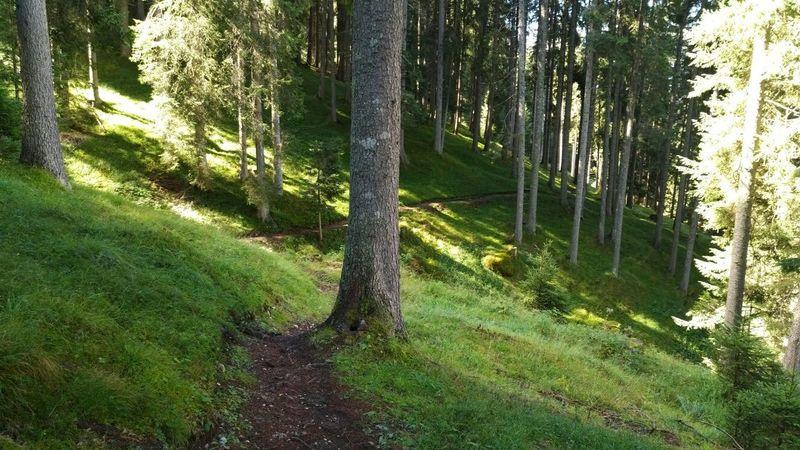 Pociace Trail.