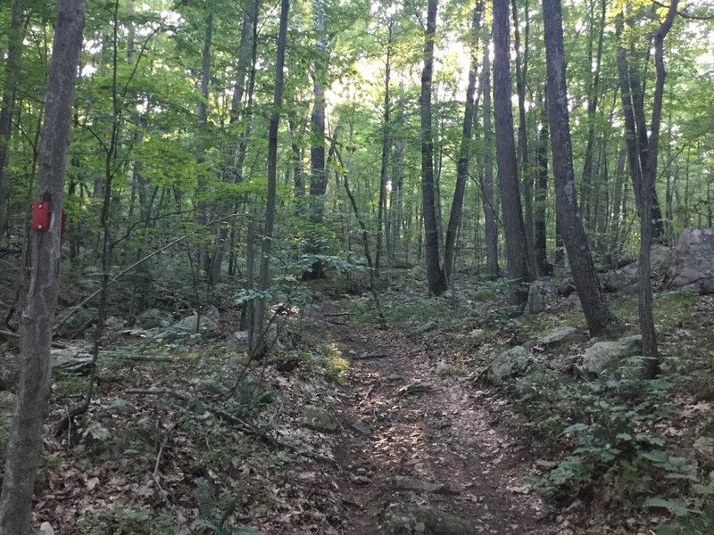 A nice traverse through the woods.