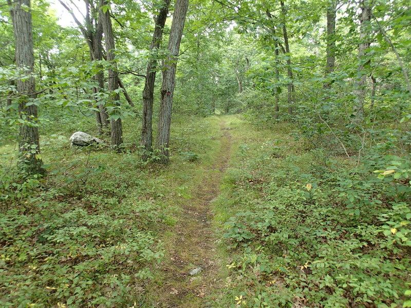 Charcoal Burner Trail