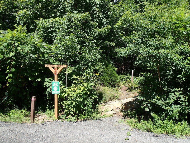 Charcoal Burner Trail at route 301
