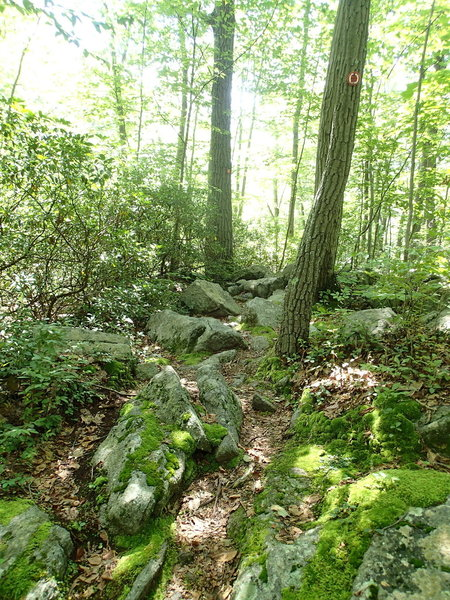 Rocky southern section of Charcoal Burner Trail
