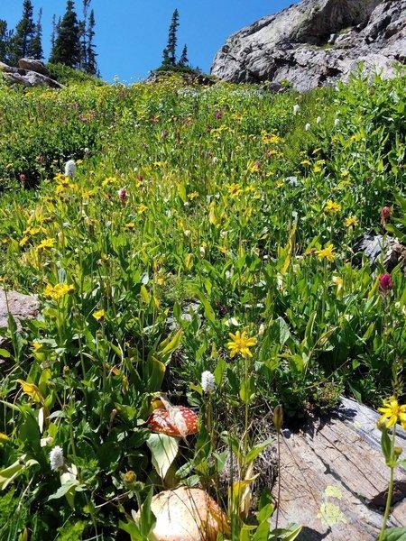 Fantastic wildflowers near the lake!