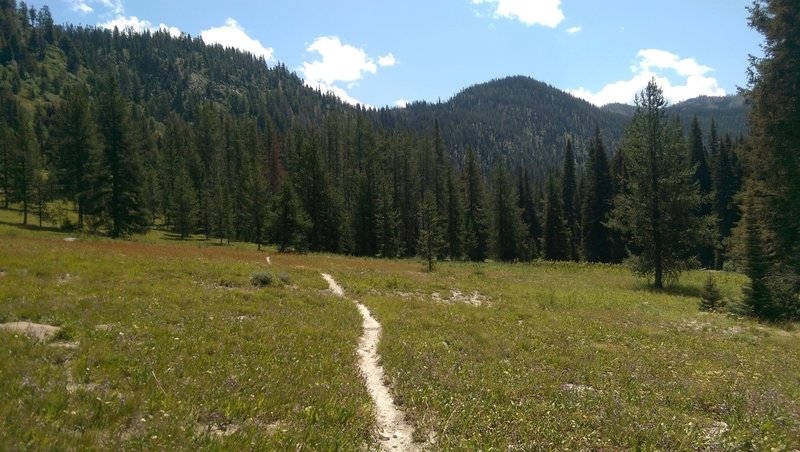 Amazing meadow on the North Fork of Kennaly Creek