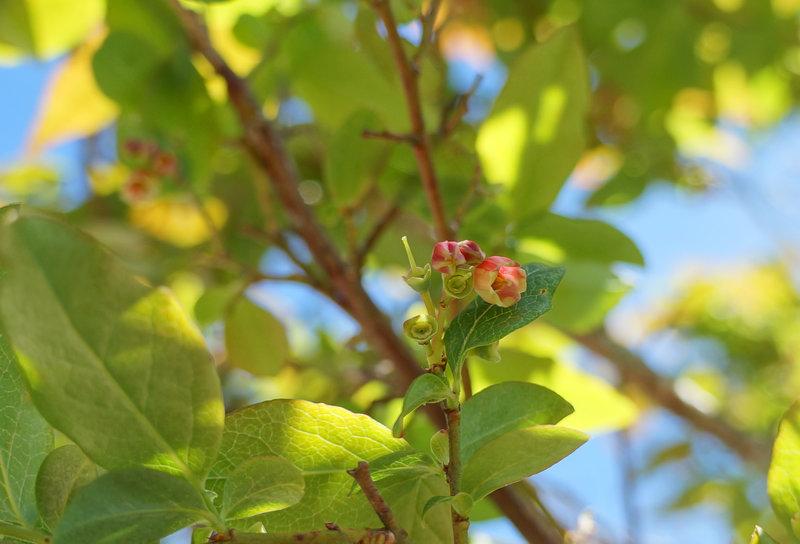 Flowering tree on trail