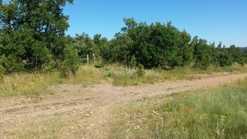 """Cross the dirt logging road and follow the trail past the """"no motorized vehicles"""" sign into the trees."""