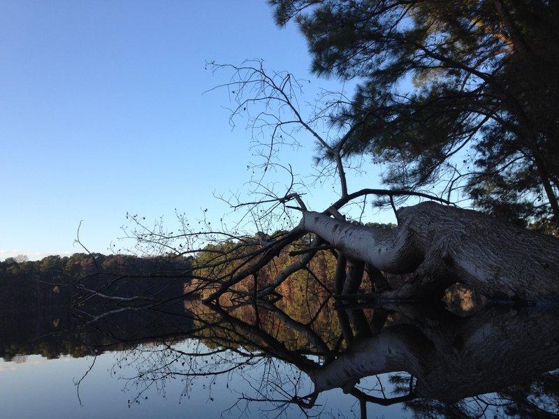 Lake Johnson reflections