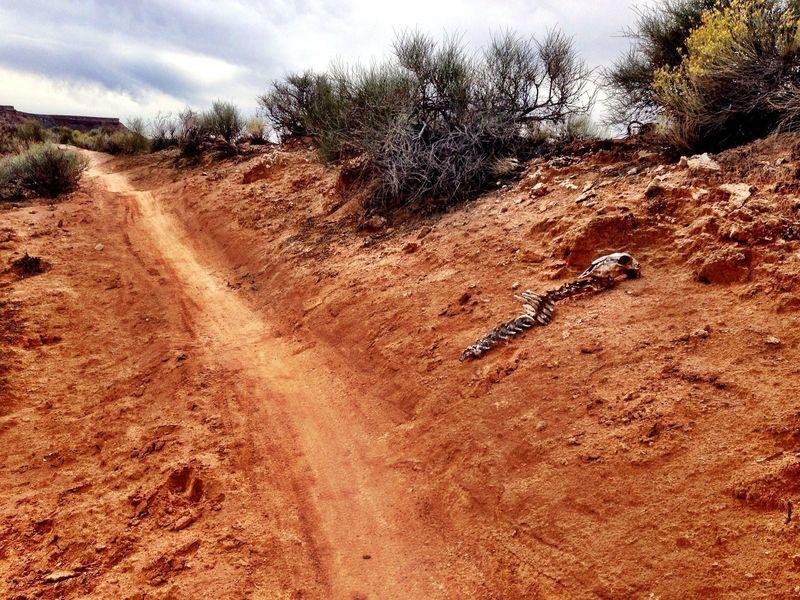 Trailside hazard on Dead Ringer