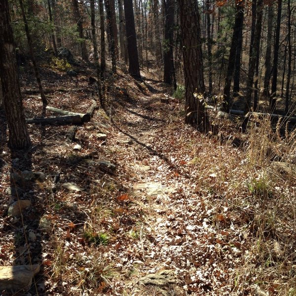 On the White River Bluff Trail- leaves cover the rocky trail.