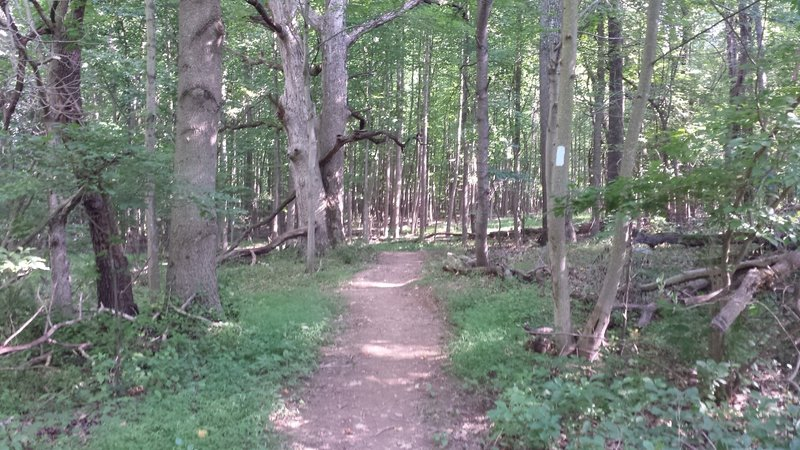 Forest section of the trail.