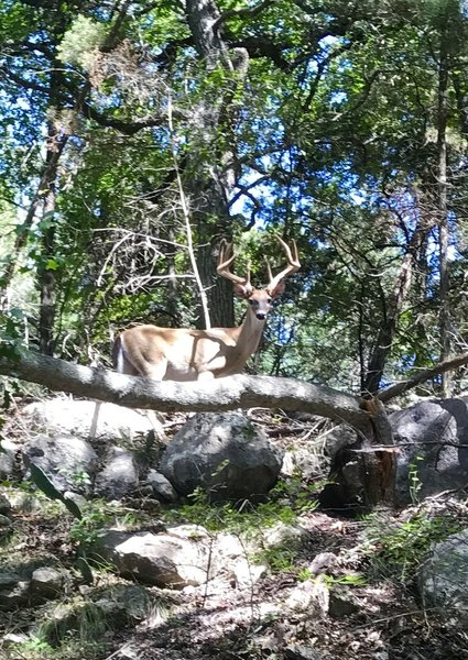 This guy and his buddies are a pretty common sight on these deeper trails into the hollow.