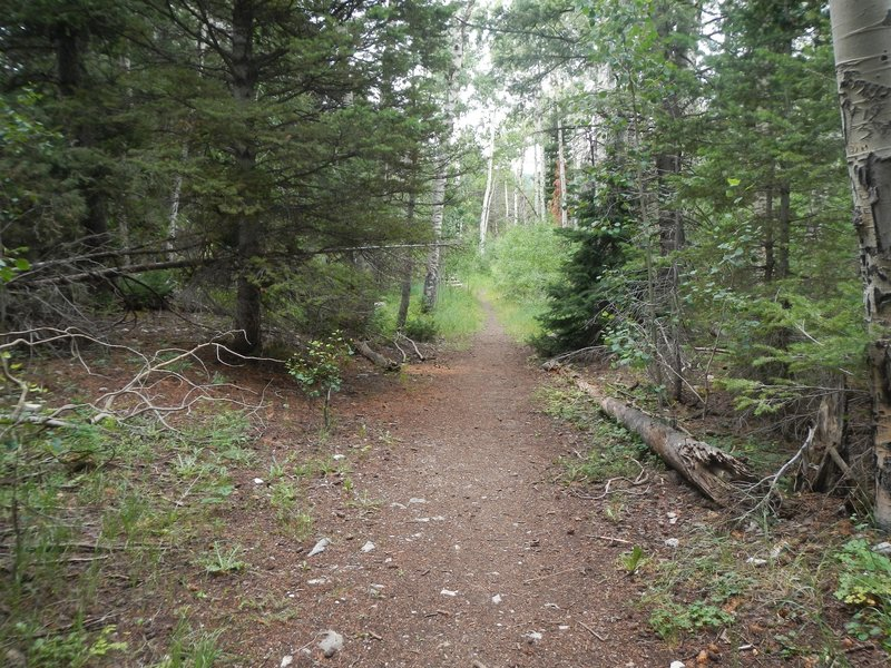 Most of the first one-third of the Josephite Point Trail is pleasant singletrack.