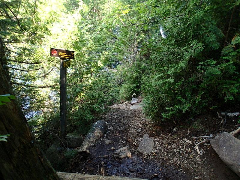 Start of trail up Mt. Colden.