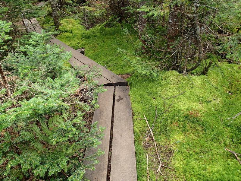 L. Morgan Porter Trail