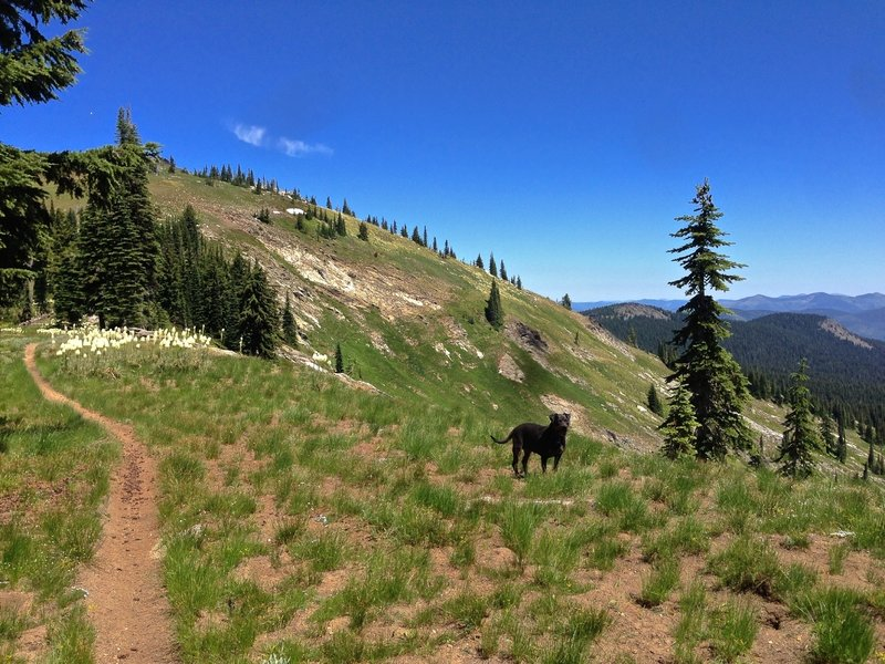 Trail up to Widow Mountain
