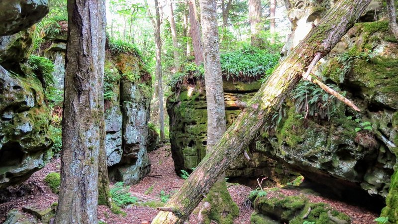 Beartown State Park features these amazing, pitted, sandstone formations throughout the boardwalk.
