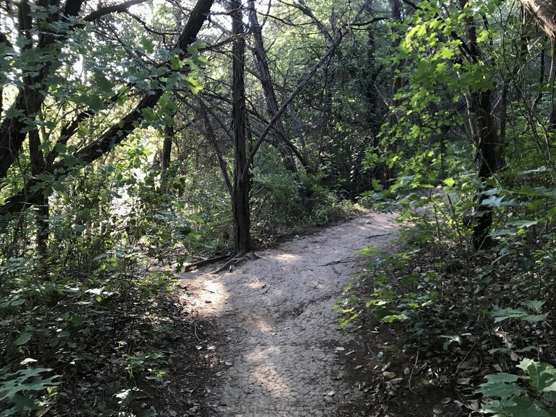 The connector between Barton Creek Trail and the Eagles Landing Loop Trail.