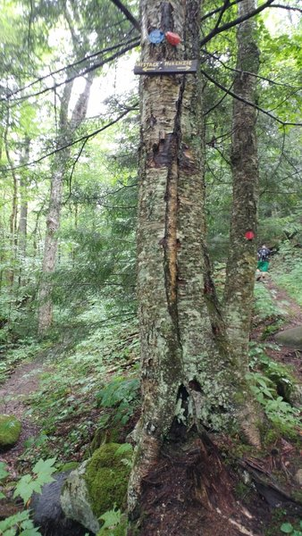 A fork in the trail. Left (BLUE) for Haystack. Right (RED) for McKenzie.