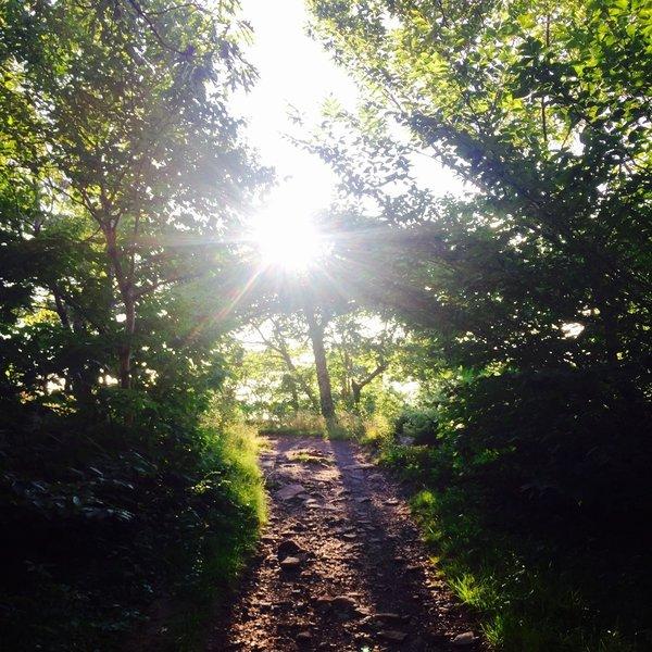 Trail.