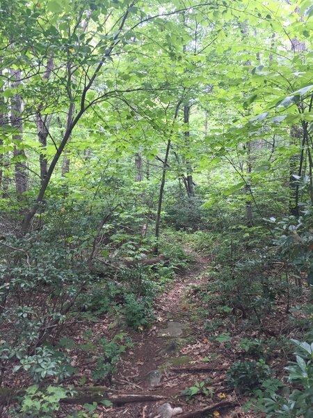 The terminus of Sam's Ridge Trail