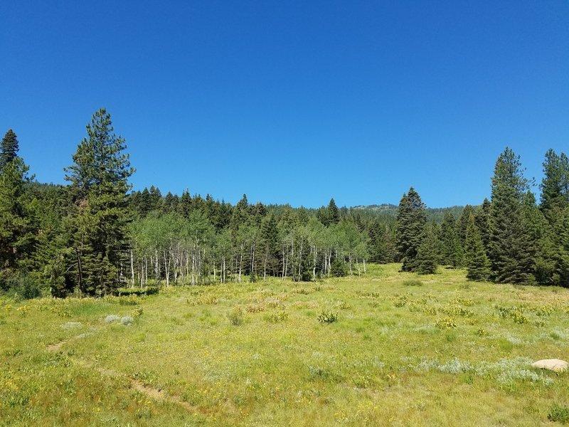Nice meadows and aspens.