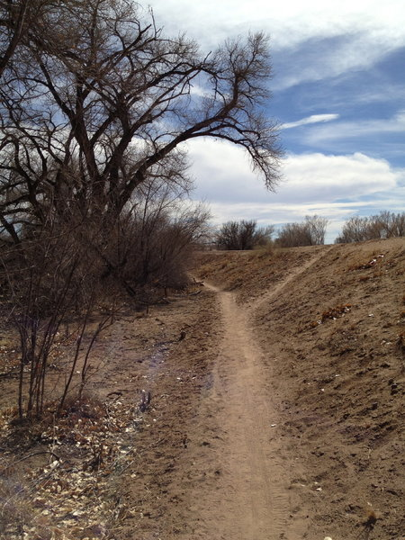 Looking back on the start of the singletrack.