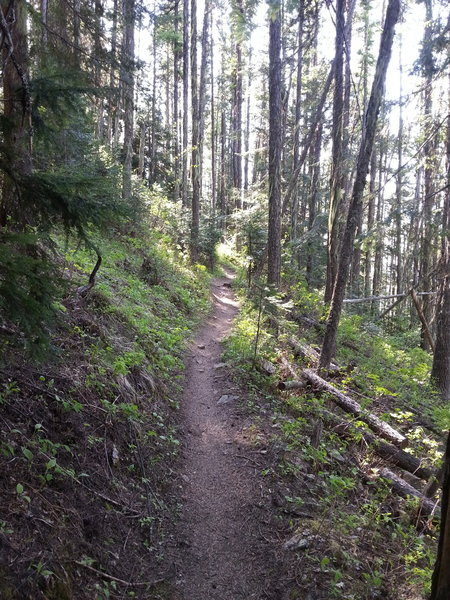 Another view on the upper Scout Trail.