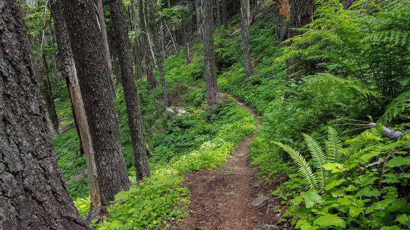 Heading down Bernard Peak Trail (#37) in June.