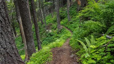 Image result for farragut state park trail
