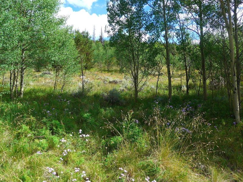 Wildflowers everywhere beside the trail.