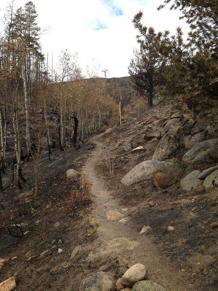 Singletrack through an aspen stand that mostly survived the burn. Sweeping vistas ahead.