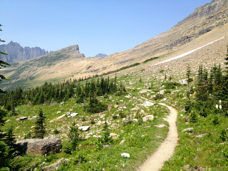 As you finally break through the tree line, you can see the trail climb all the way up to Piegan Pass.